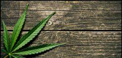 Cannabis leaf on table